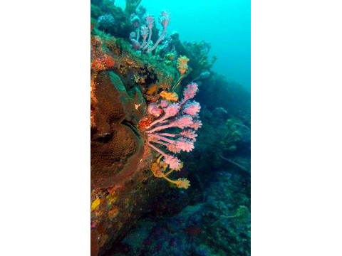 Dive Location - Home Bombie