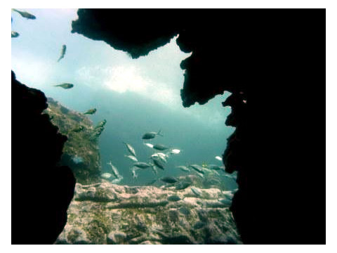Dive Location - North Bommie